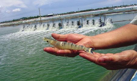 Hóa chất formalin trong nuôi trồng thủy sản – Hóa Chất Sao Mai